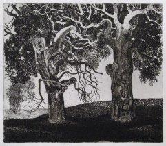 233-F Radierung Zwei Bäume 15,5x18cm