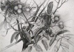 006-A Bleistift 48x60cm