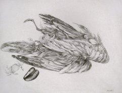043-A Bleistift 30x40cm
